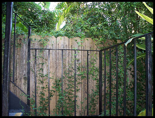 smilax on fence.jpg