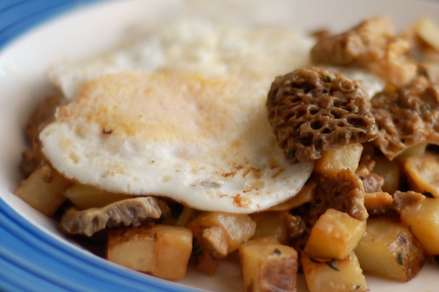 Morel hash.jpg