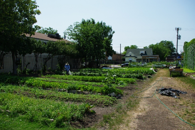 Garden2.jpg