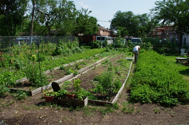 Garden1.jpg