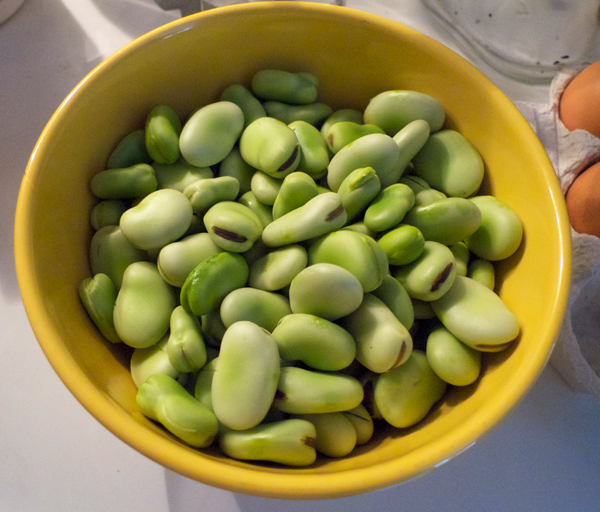 favas.jpg