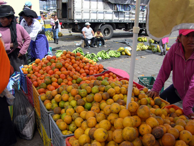 Caluma Oranges.jpg