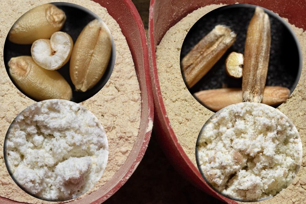 210904 Kernza vs Soft white wheat flours DEB_0625 copy