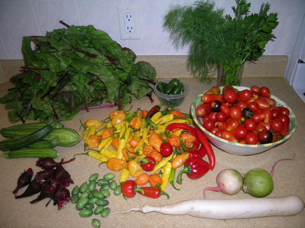 Morning Harvest.JPG