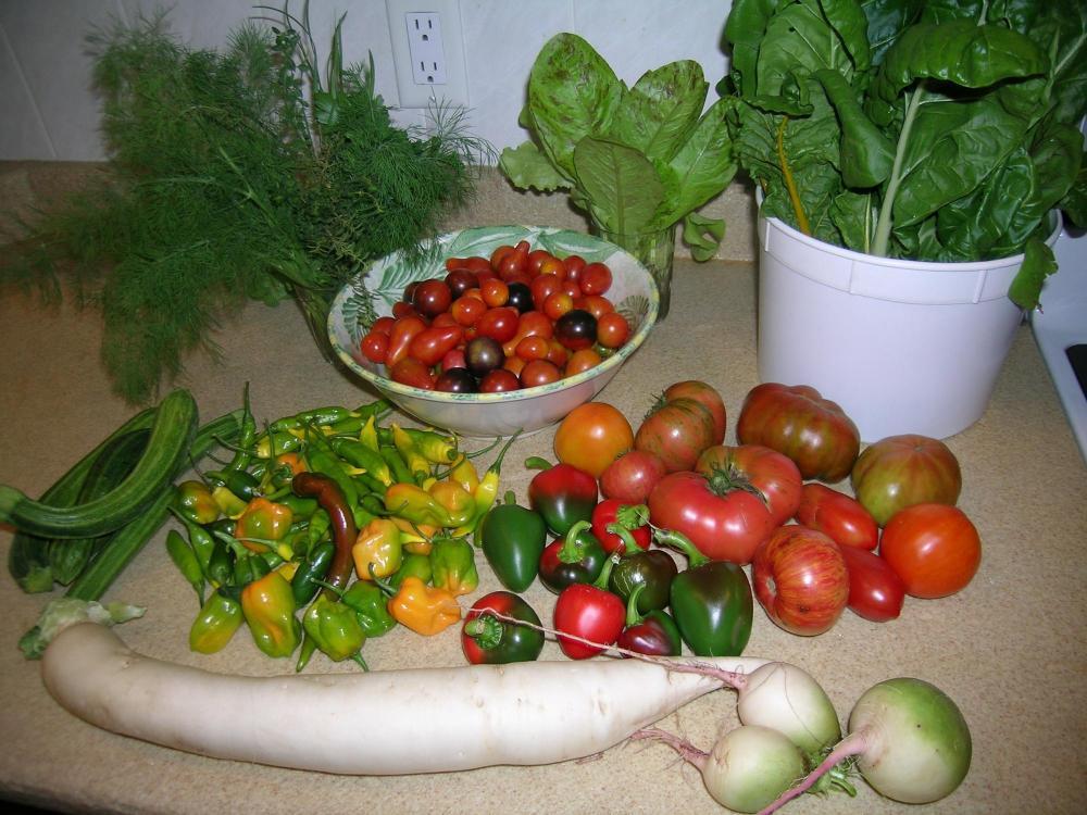 Oct. 16 Harvest.JPG