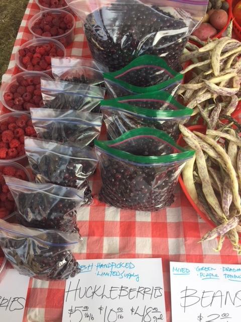 Aug. 4 Huckleberries.JPG